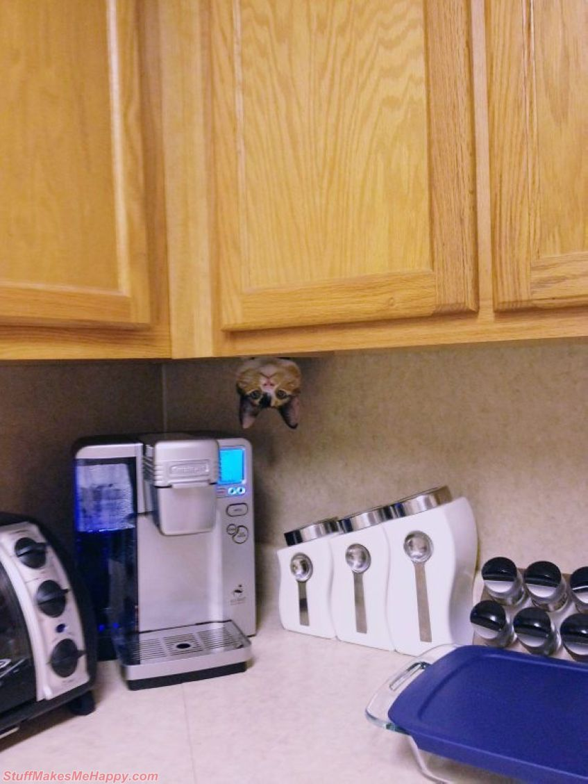 15. Cats surprise us every day
