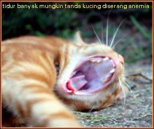 perubahan corak tidur dan gusi pucat mungkin tanda kucing diserang anemia