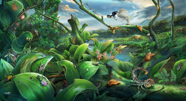 Newly discovered miocene biome sheds light on rainforest evolution