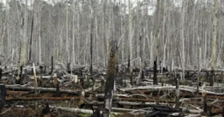 """France set out plans on Wednesday to tackle deforestation around the world, saying it would look to curb imports of products such as palm oil, soy and beef that contribute to the destruction of forest areas.  © Beawiharta, REUTERS 