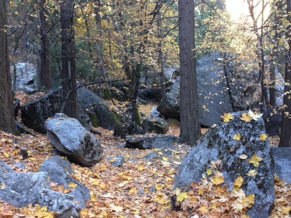 forest bathing among rocks
