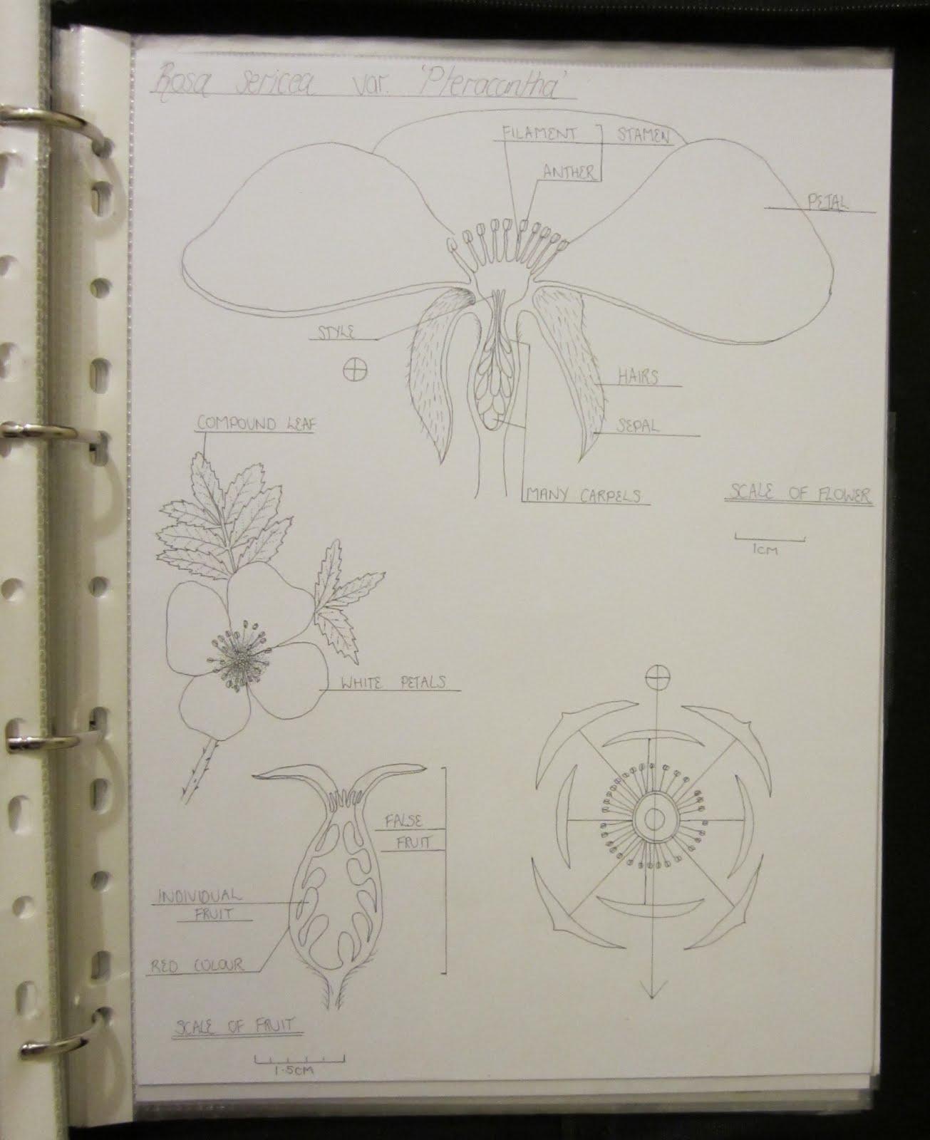 inky leaves. Black Bedroom Furniture Sets. Home Design Ideas
