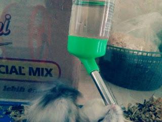 Cara Membuat Tempat Minum Hamster Simpel dan Praktis