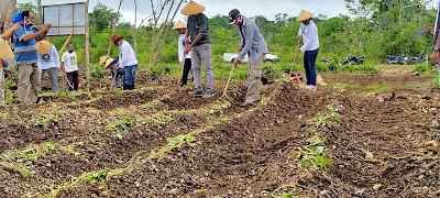 Proses Tanam Pada Lokasi Kebun Manunggal Danar II, Sabtu (27/6/2020). Foto:GG