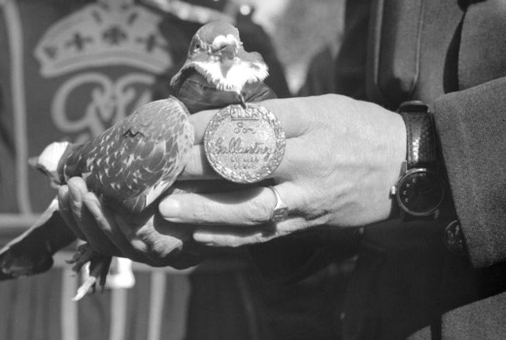 G. I. Joe receiving the Dickin Medal.