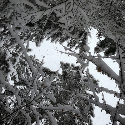 snow on branches of trees www.ruralmag.com
