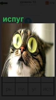 Кошка с выпученными зелеными глазами от испуга смотрит на верх