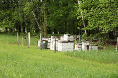 bee hives behind electric fence