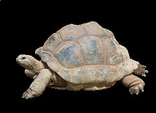 About Turtle ( कछुए )