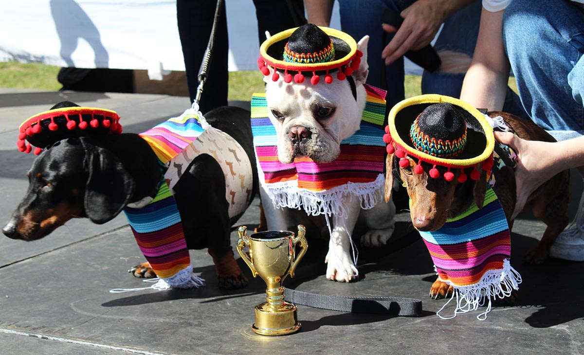 Santa Paws in the Park best dressed dog competition winners wear Mexican hats and ponchos