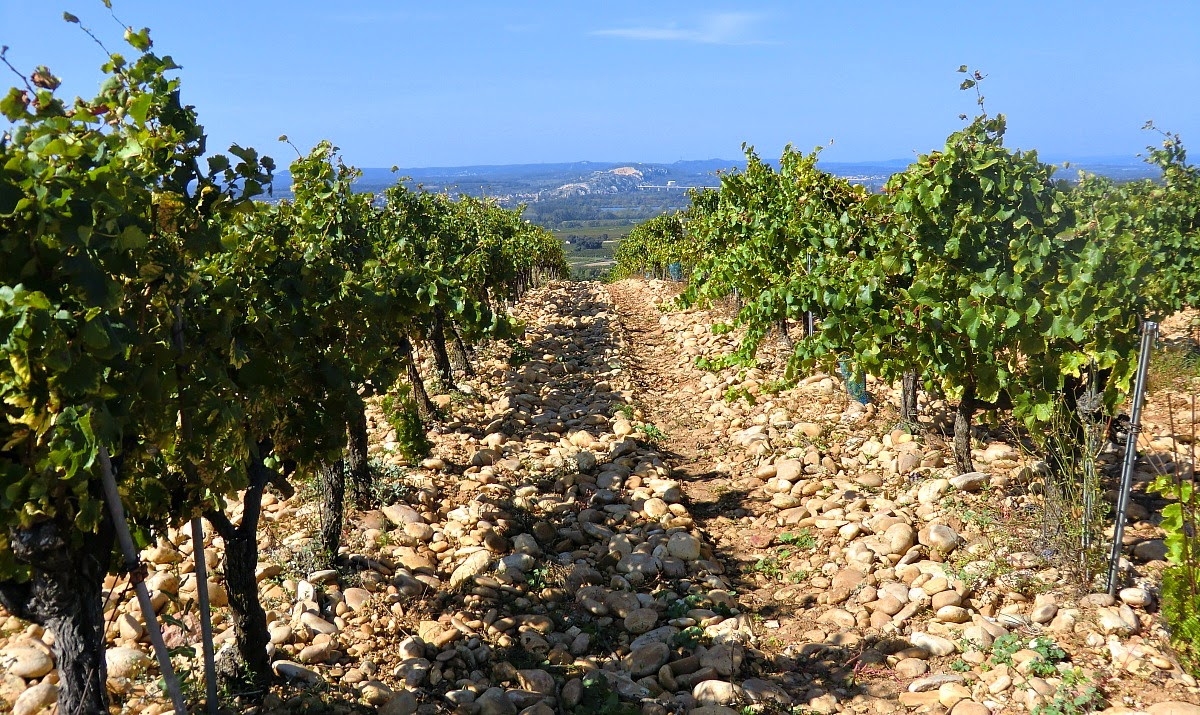 One of the vineyards near the castle ruins of Châteauneuf-du-Pape