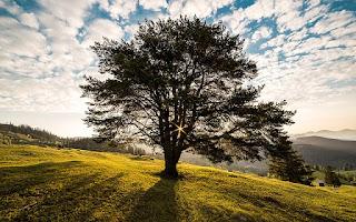 Sequoia Fund: eine wertvolle Empfehlung von Warren Buffett