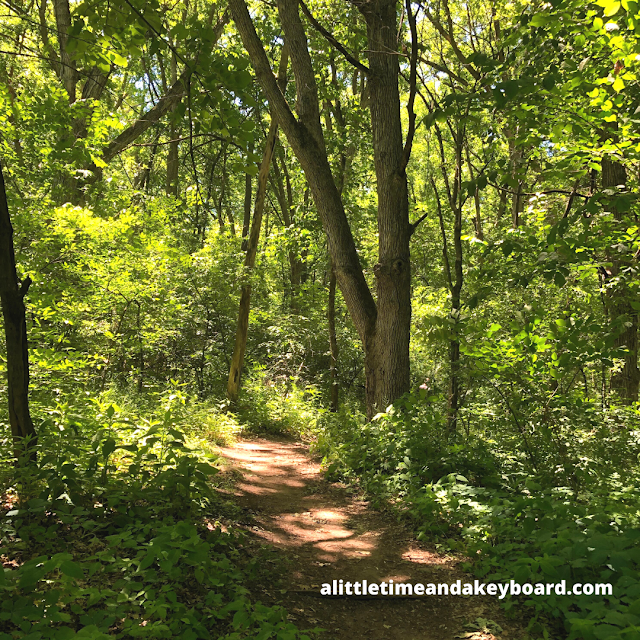 Basking in the sights and sounds of  the dense forest at Kettle Moraine State Forest
