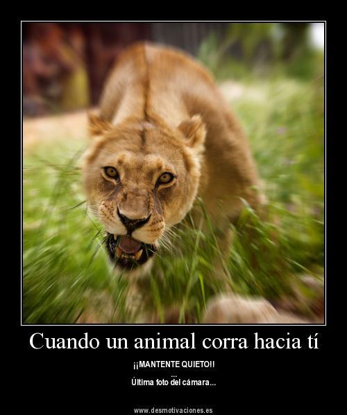 Imagenes De Animales Con Frases De Amor