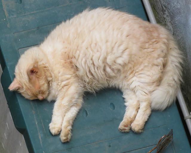 Feline siesta, Via Borsi, Livorno