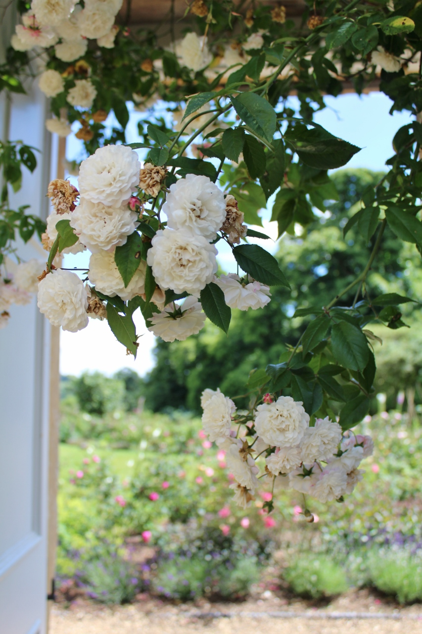 White flowers over garden arch