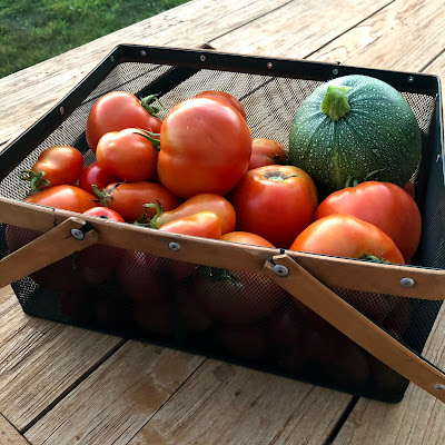 Harvest basket about two thirds full of tomatoes, with one zucchini