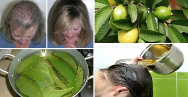 هذه الفاكهة توقف سقوط الشعر، تحمي قلبك، تساعدك على فقدان الوزن و ... !!! روعة
