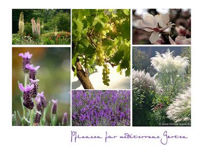 mediterrane Pflanzung, mediterraner Garten mit typisch mediterraner Bepflanzung, mediterrane Gehölze, mediterrane Stauden, Gräser, Zwiebeln und Blumen,