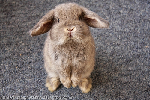 Cute little bunny.