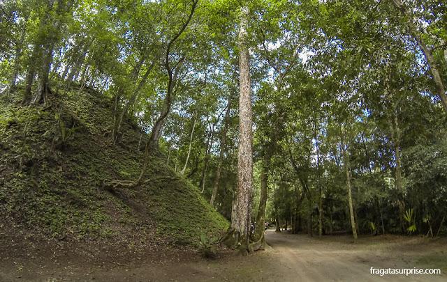 Pirâmide encoberta pela mata em Tikal, Guatemala