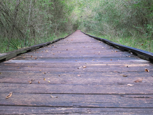Pineywoods Boardwalk Trail, Lake Livingston State Park, Texas. October 2020.