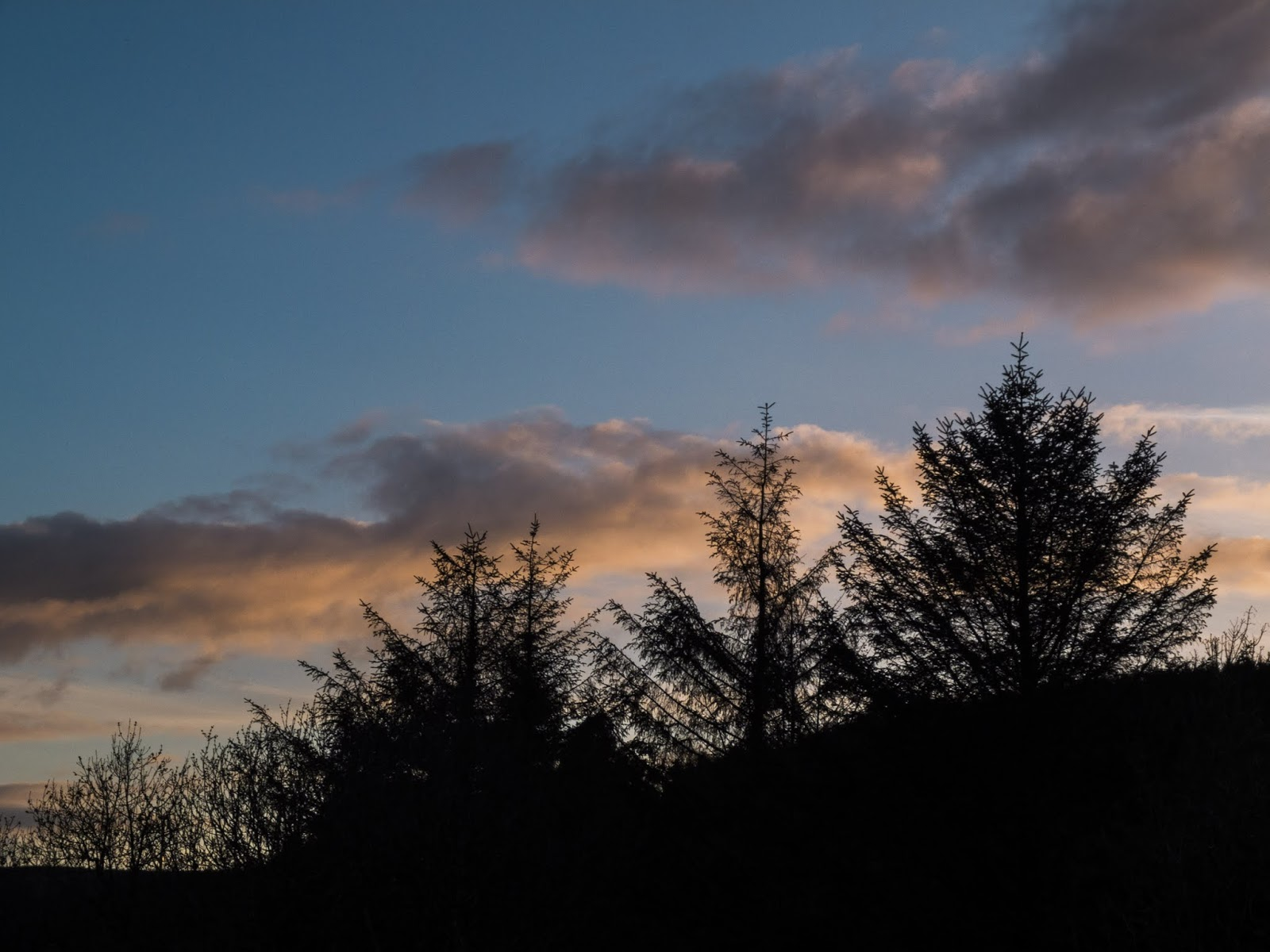 Conifer trees on a mountain at sunset with some fluffy clouds in Co.Cork, Ireland.