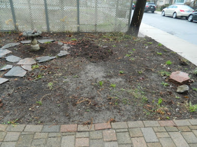 New Summerhill Toronto Front Shade Garden Renovation Before by Paul Jung--a Toronto Organic Gardener