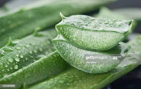 aloe vera for itchy skin