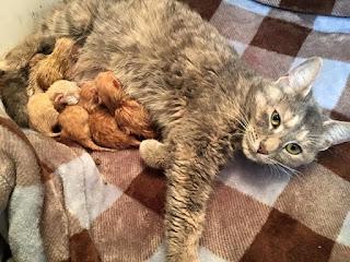 ¿Cuántos gatos puede tener una gata?