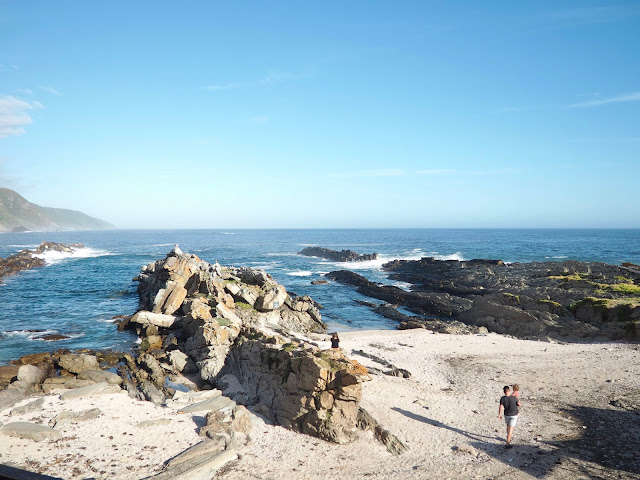Tsitsikamma National Park, Garden Route, South Africa