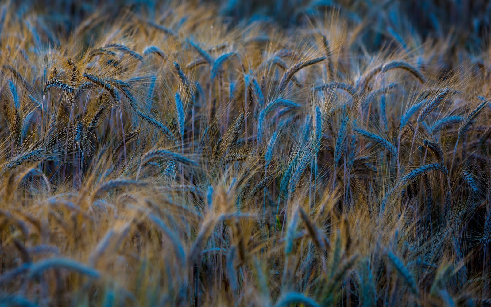 Crop Wallpapers