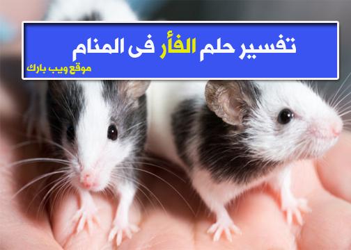 حلم الفأر   تفسير حلم الفأر فى المنام 2021