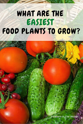 Vegetables that grew easily