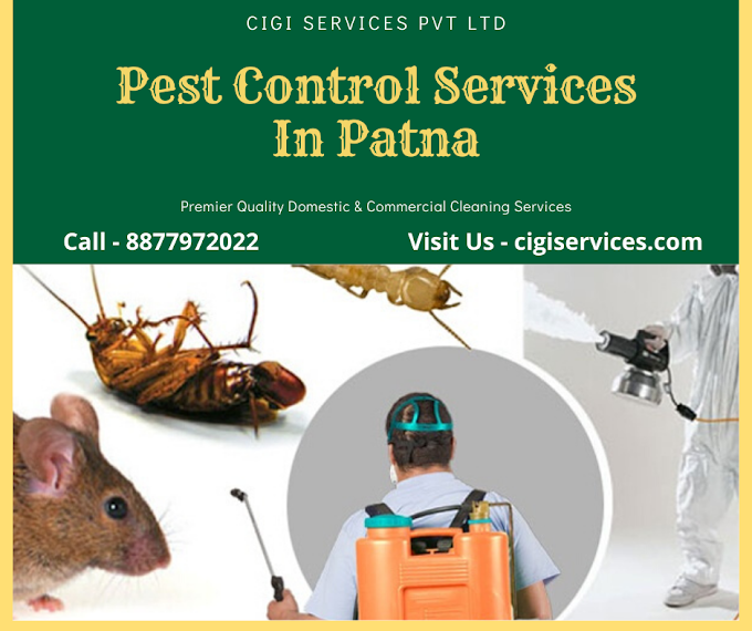 Pest Control: Important Frequently Asked Questions