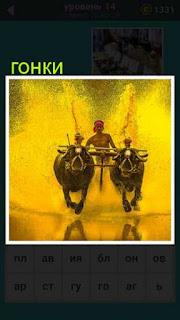 происходят гонки на быках с погонщиком сзади игра 667 слов 14 уровень