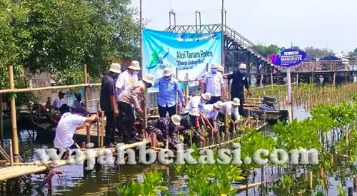 PJB UP Muara Tawar Tanam 2.626 Pohon Mangrove Area Pusat Restorasi dan Pembelajaran Mangrove (PRPM) Paljaya