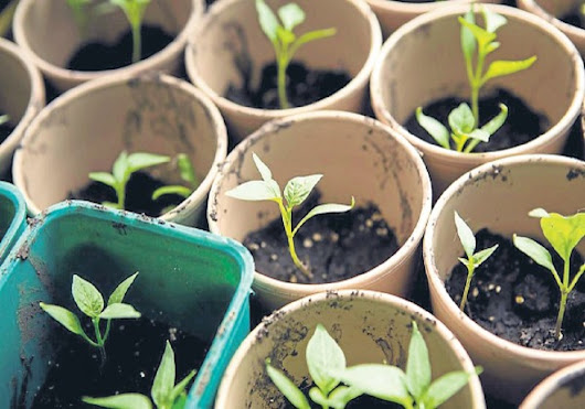 6 Easy Ways To Grow Plants From Seed