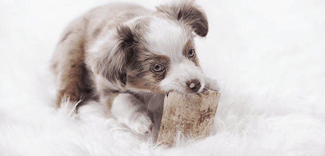 Be like a dog with a bone Dogs don't like bones, they love them. They are totally devoted to them. Whilst the dog is working on a particular bone it's whole world is that bone, everything else ceases to exist. Be like that dog with your projects. Or at least try to be.