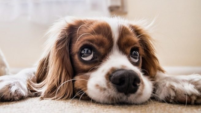 Estas son las 4 enfermedades en perros más frecuentes