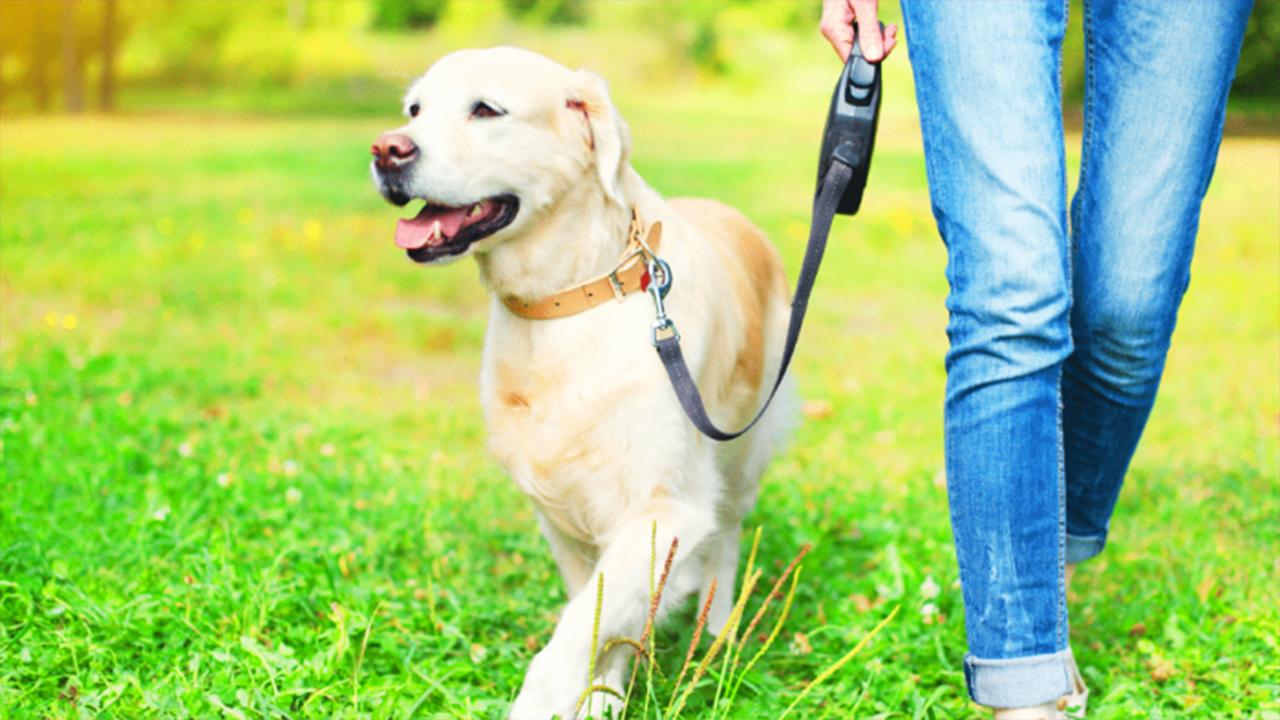 Quand nourrir son chien   Quel est le meilleur moment pour nourrir votre chien ?