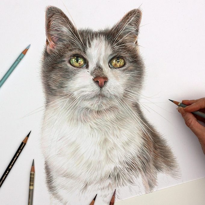 05-Cat-Angie-A-Pet-and-Wildlife-Pencil-Drawing-Artist-www-designstack-co
