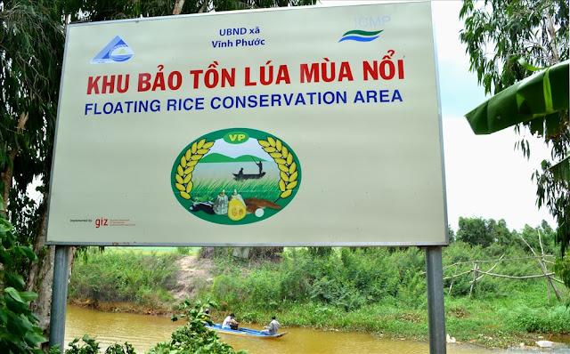 Vùng bảo tồn lúa mùa nổi của An Giang ở huyện Tri Tôn.
