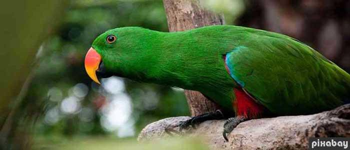 Manfaat Burung Betet Untuk Menyembuhkan Sakit Mata