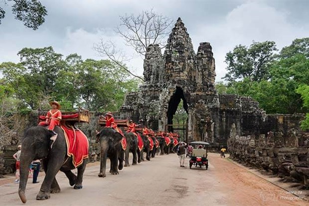 Cambodia to ban using elephants to serve tourists at the Angkor Wat temple complex