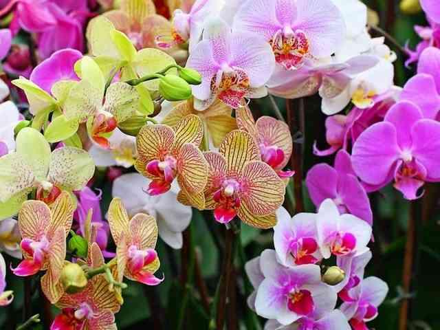 Indahnya Bunga-bunga Rumah Bunga Rizal