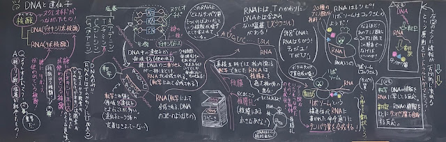 矢口はっぴーブログ「わかりやすい高校生物基礎・生物まとめ」(過去の記事に授業・講習の内容があります。質問はYouTube講義動画のコメント欄にお願いします)