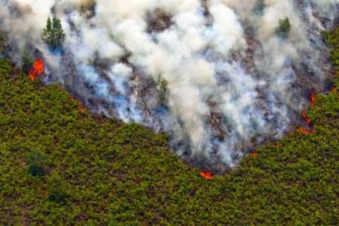 Harvard dan Columbia memperkirakan 100.300 kasus kematian dini akibat  kebakaran hutan