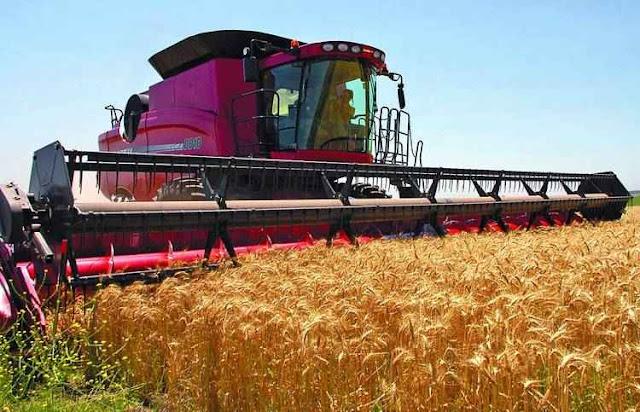 Colheita do trigo no sul da província de Buenos Aires