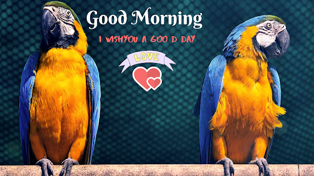 parrot Bird good morning Images
